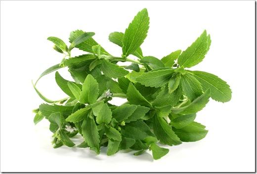 Лечебные характеристики травы «Стевии»