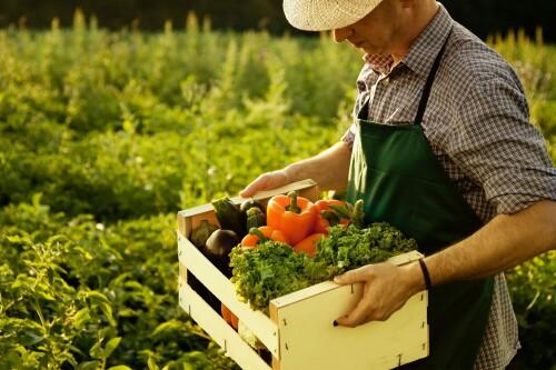 Фермерские продукты - какие они?