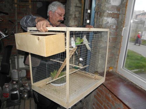 Клетка для попугая своими руками как сделать